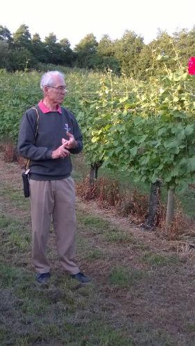 vineyard1-w500-h500