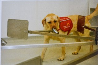Medical Detection Dogs - Cancer detection dog