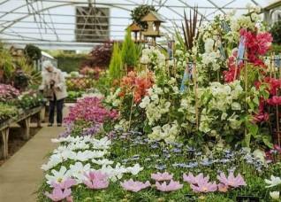 Wistow garden centre