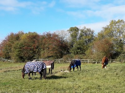 Walk 28 Oct 2018 Wistow3